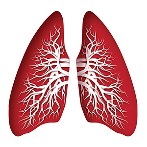 Illustration of Lungs in Red
