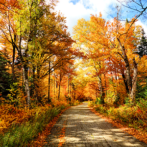Fall Trees and Trail