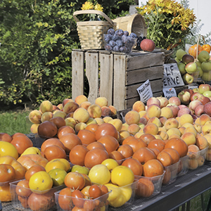 Fruit and Vegetable Roadside Stand