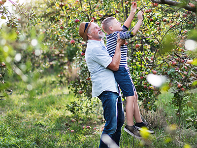 Older man lifting grandchild to pick apples