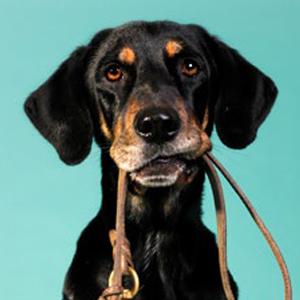 dog-with-leesh