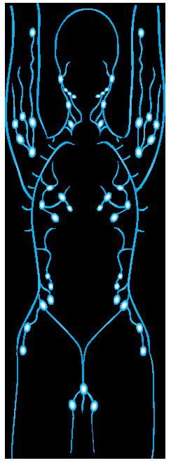 lymphmatic-system
